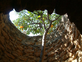 The remarkable subterranean gardens of Baldasare Forestiere